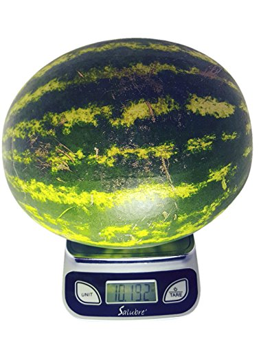 REM Concepts Digital Scale - 1g. to 11 lbs.