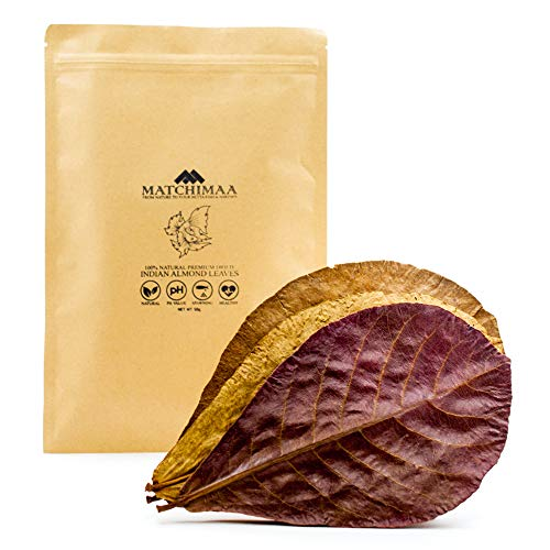 Premium Dried Indian Almond Leaves. Size 6-9' Pack 50g(20-25 leaves) Ready To Use. Catappa leaves...