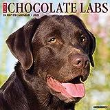 Just Chocolate Labs 2021 Wall Calendar (Dog Breed Calendar)