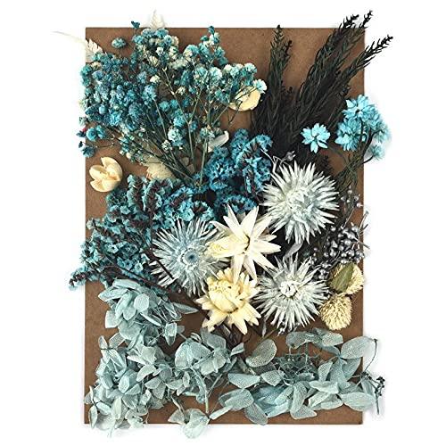 Kaxceay DIY Getrocknete Blume für Harzform, die echte Blume für Harz Füllungen Nail Art Home Handwerk Harz Casting Formwerkzeug (Color : 06)