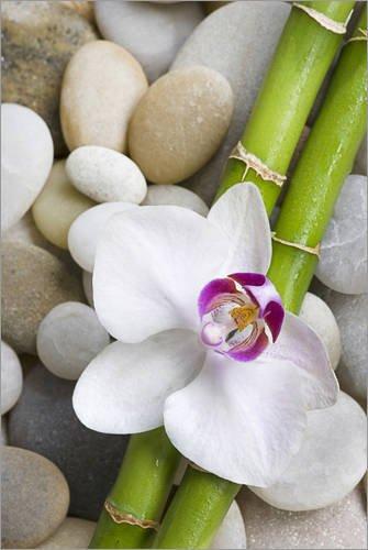 Posterlounge Acrylglasbild 20 x 30 cm: Bambus und Orchidee von Andrea Haase Foto - Wandbild, Acryl Glasbild, Druck auf Acryl Glas Bild