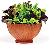1000+ Lettuce Mix Seeds Please Read! This is A Mix!!! 20 Varieties Seeds Heirloom Non-GMO. Seeds are not Individually Packaged!