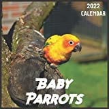 Baby Parrots Calendar 2022: 2021-2022 Baby Parrots Weekly & Monthly Planner   2-Year Pocket Calendar   19 Months   Organizer   Agenda   Appointment   For Baby Parrots Lovers