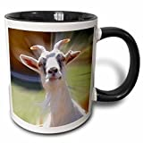 3dRose Funny Curious Goat Photography Mug, 11 oz, Black