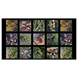 Amazing Frogs 24in Frog Panel Black Quilt Fabric