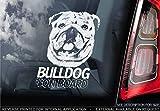 Sticker International Englische Bulldogge - Autoaufkleber - Hund Schild Fenster, Stoßstange Aufkleber Geschenk - V002 - Weiß/Klar - Externe Außen Aufdruck,...