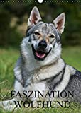 Faszination Wolfhund (Wandkalender 2022 DIN A3 hoch)