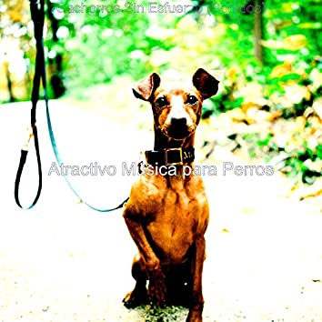 Cachorros Sin Esfuerzo (Sonidos)