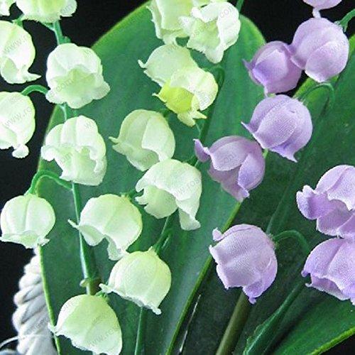 Lily of the Valley graines de fleurs, graines cloche d'orchidées, riche arôme, bonsaï semences de fleurs, orchidées-20 multicolores graines