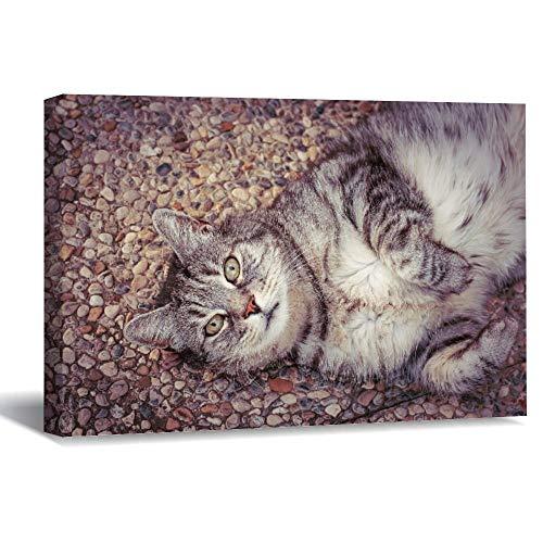 Lienzo enmarcado de madera para pared, diseño de gato satisfecho con el suelo acostado de animales domésticos o gatos, 24 obras de arte de pared para sala de estar o dormitorio decoración de 20 x 30 cm