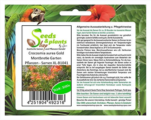 Stk - 1000x Crocosmia aurea Gold Montbretie Garten Pflanzen - Samen XL-B1041 - Seeds Plants Shop Samenbank Pfullingen Patrik Ipsa