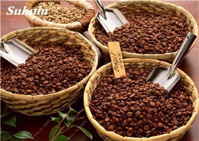 Graines de café torréfié, le café Arbuste de l'Arabie (Coffea arabica) plantes bio, Balcon Bonsaï Graines, des plantes pour jardin Accueil 10 pièces 4