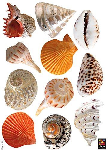 Décoration adhésive Coquillages Tropicaux, Polyvinyle, Multicolore, 21 x 0.1 x 29.6 cm 157148