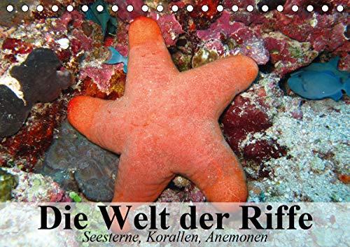 Die Welt der Riffe. Seesterne, Korallen, Anemonen (Tischkalender 2021 DIN A5 quer)