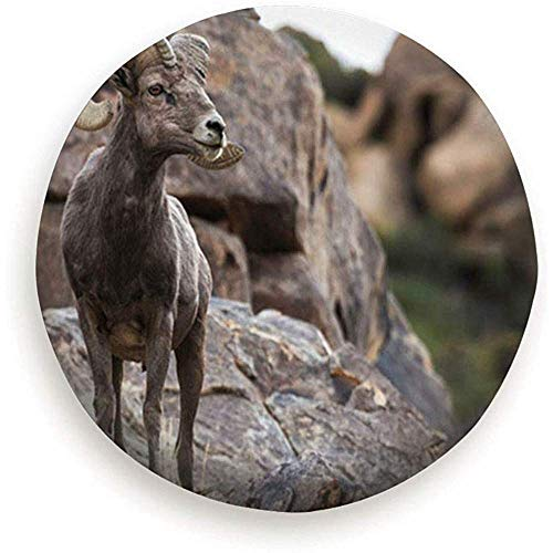 Hiram Cotton Spare Tire Cover Wachsame Männliche Ram Big Horn Schafe Tiere Wildlife Bighorn Reserverad Reifen Abdeckung Wasserdicht Staubdicht Universal Für Rv,SUV Und Viele Fahrzeug