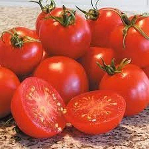 Glacier Tomato Seeds - Highly Productive & Can Produce for The Whole Season!!.(10 - Seeds)