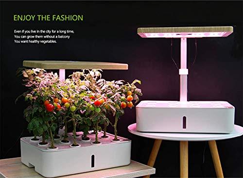 FEDYS Aero Garden Intelligent Indoor-Garten Geeignet für Gemüse/Obst Indoor-Bauernhof Automatische Bewässerung Bodenloser Anbau Hydroponik,B