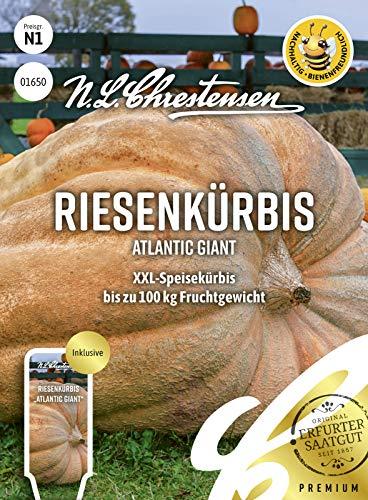 Riesenkürbis Atlantic Giant, bienenfreundlich, XXL-Speisekürbis, Samen