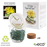 GROW2GO Cactus starter kit per la coltivazione - Set per la coltivazione di mini-serra, semi di cactus e terreno - idea regalo sostenibile per gli amanti delle piante (Faucaria Tigrina)