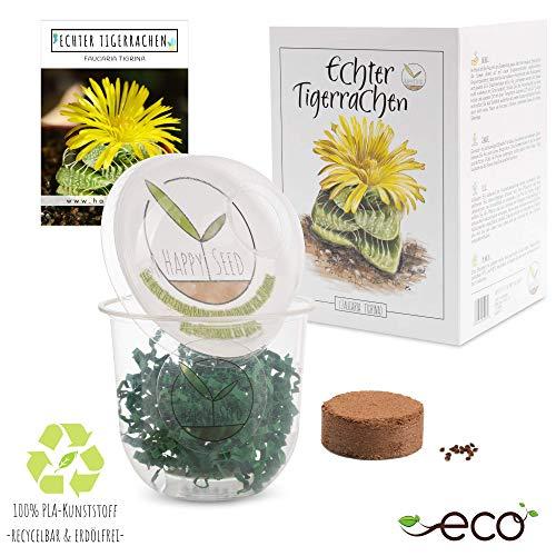GROW2GO Kit de culture de cactus - Set de plantation de mini-serre, graines de cactus et terreau - idée cadeau durable pour les amoureux des plantes (Faucaria Tigrina)