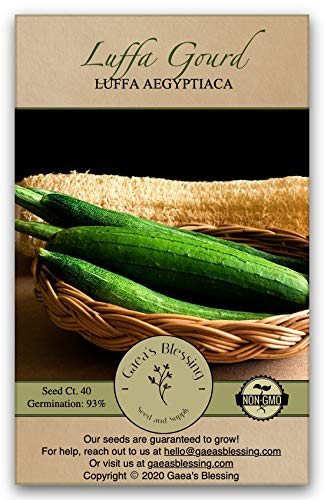 Gaea's Blessing Seeds - Luffa Gourd Seeds (40 Seeds) Non-GMO - with Easy to Follow Planting Instructions - Heirloom Sponge Loofah Muop Huong 93% Germination Rate