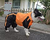 Lovelonglong Border Collie Dog Hooded Raincoat, Collie Rain Jacket Poncho Waterproof Clothes with Hood Breathable 4 Feet Four Legs Rain Coats for Border Collies Large Dogs Orange L-M+