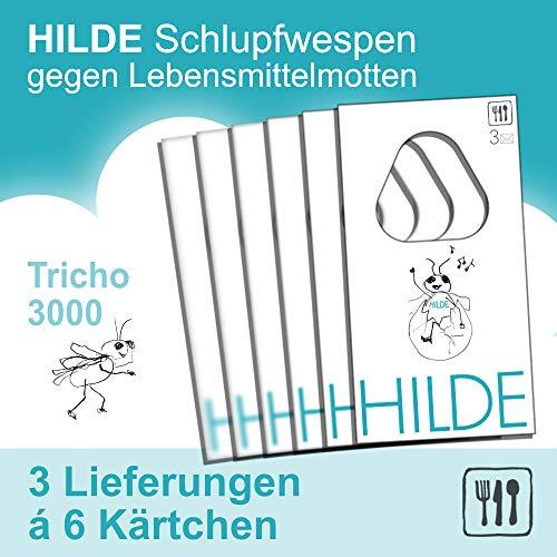 Mottenshop24 ***Hilde*** Schlupfwespen gegen Lebensmittelmotten 3x6 Karten | natürlich - wirksam - chemiefrei - schonend