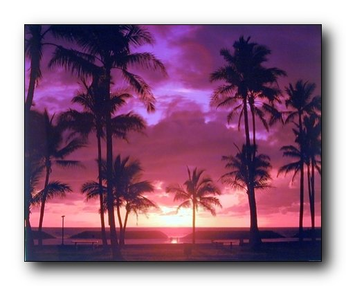 Wall Decor Tropical Palm Trees Purple Sunset On Ocean Beach Nature Art Print Picture (8x10)