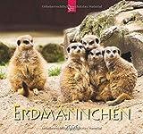 Erdmännchen: Original Stürtz-Kalender 2020 - Mittelformat-Kalender 33 x 31 cm