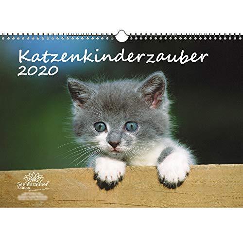 Katzenkinderzauber DIN A3 Kalender 2020 Katzenkinder Katzenbabys - Seelenzauber