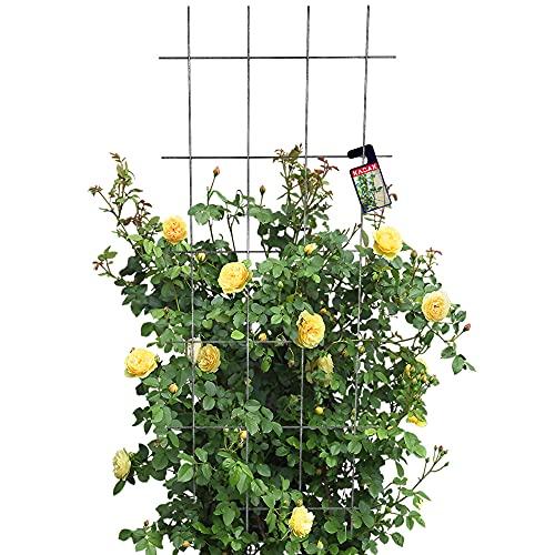 KADAX Rankgitter, Gitterspalier für Garten, Pflanzen, Balkon, Terrasse, Metall Spalier, Rankhilfe, Klettergitter aus Stahl, Kletterhilfe,...
