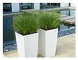 3 x Carex howardii 'Phoenix Green' 1 Liter Segge ab