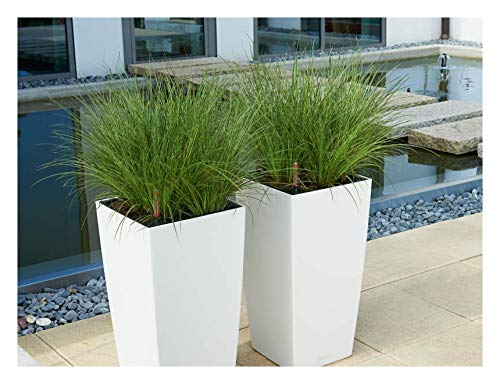 3 x Carex howardii 'Phoenix Green' 1 Liter (Ziergras/Gräser/Stauden) Segge ab 3,99 € pro Stück