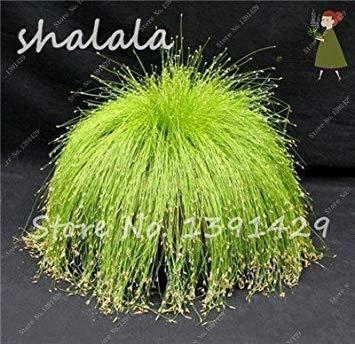 Potseed 200 PC Multi Color Garten Ziergrassamen Schöne Grassamen, Samen, natürliche Wachstum, die Keimungsrate 95% 15
