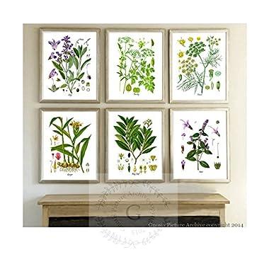 Herbs Kitchen Wall Decor Set of 6 Unframed Culinary Herbs Botanical Art Prints, Kitchen Decor, Dining Room Decor
