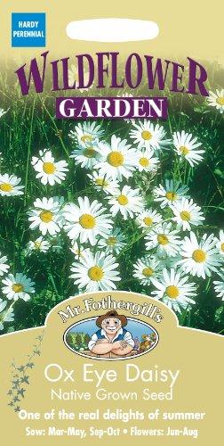 Mr. Fothergill's 15458 Paquet de 750 graines de Marguerite commune