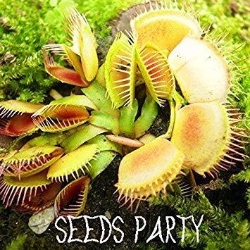1000 Teile/paket Topf Insektenfressende Pflanzensamen Dionaea Muscipula Riesen Clip Venus Fliegenfalle Samen Fleischfressende Pflanze, WGQNEL