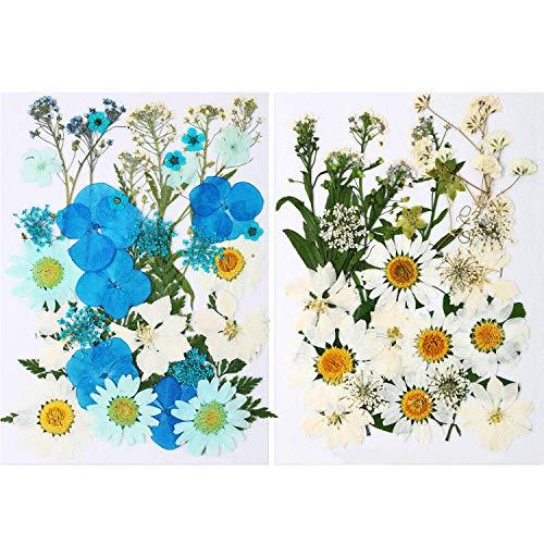 71 Stücke Natürlich Getrocknet Blumen Set Echt Gepresst Blütenblätter Weiß Blau Gänseblümchen Gepresst Blumen Gemischt Dekorativ Getrocknet Blumen für DIY Harz Kerzen Herstellung Schmuck Nagel Kunst