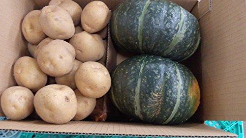 北海道 ニセコ羊蹄山麓産 じゃがいも 男爵いも(LM)5kg&かぼちゃ2玉 2種セット [9月から11月末まで]