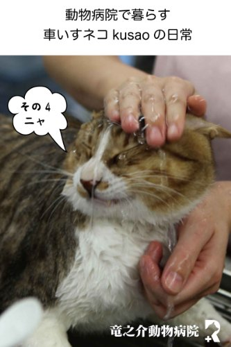 Every day of the wheelchair cat kusao which lives in an animal hospital4 kusao blog (Japanese Edition)