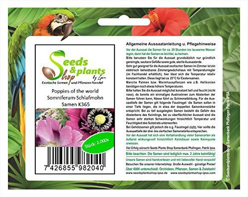 Stk - 2000x Poppies of the world Somniferum-Schlafmohn-Eschscholzia Samen K365 - Seeds Plants Shop Samenbank Pfullingen Patrik Ipsa