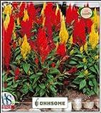 Seedsown Fiore Semi Celosia misto semi - Semi cresta di gallo - Celosia Plumosa Semi Kitchen Garden Seeds pack Seed