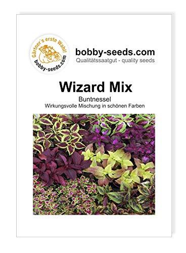 Bobby-Seeds Blumensamen Buntnessel Wizard Mix Portion
