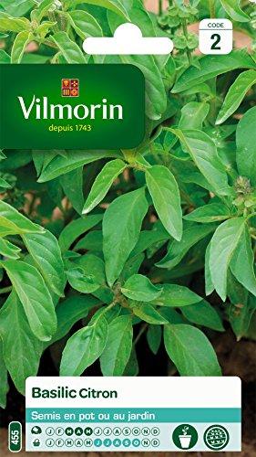 Vilmorin 5873342 Pack de Graines Basilic Citron