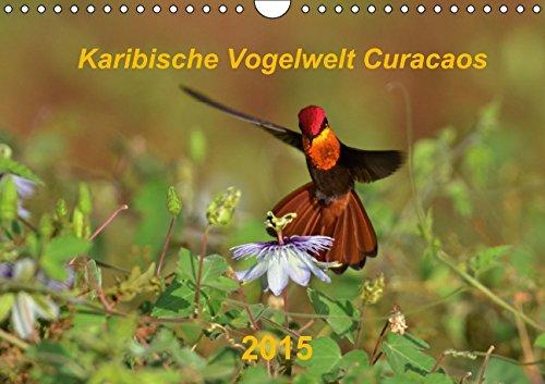 Karibische Vogelwelt Curacaos (Wandkalender 2015 DIN A4 quer): 13 Aufnahmen aus der Vogelwelt Curacaos (Monatskalender, 14 Seiten)