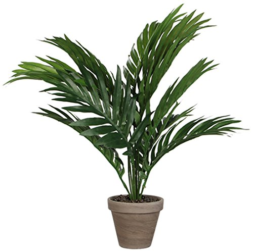 Areca Palme H45 D60 cm, grün im Tontopf D 11.5  cm