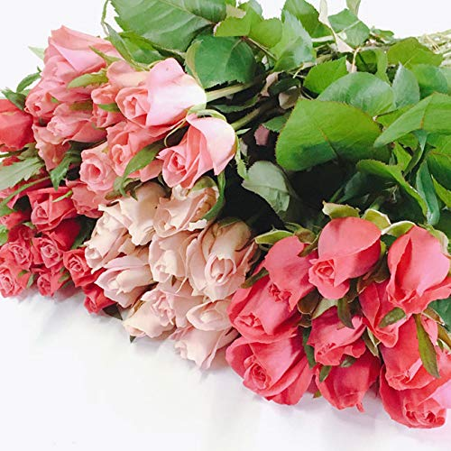 バラ 30本 山形県 寒河江市産 大沼バラ園 切り花 ピンク系【#元気いただきますプロジェクト】