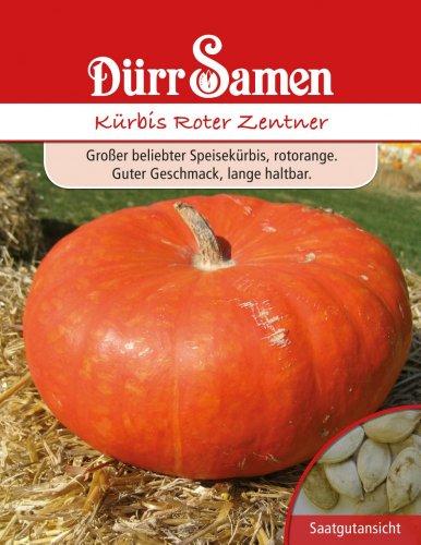 Dürr Samen 0519 Kürbis Roter Zentner (Kürbissamen)