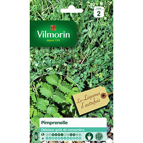 Vilmorin - Sachet graines Pimprenelle - Sanguisorba minor