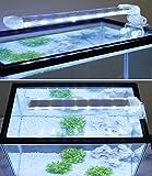 BPS® Lámpara de Acuario LED Iluminación Luces para Plantas Luz Blanco y Azul 2 Modelos para Elegir 4W/8W (8W: 300 x 40 mm) BPS-6872
